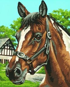 Malen nach Zahlen - Pferdeportrait - Schipper KIDS - Kinder Bilder